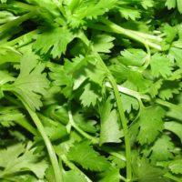 Organic coriander