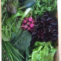 leafy salad bundle